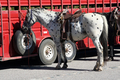 Technology - Horses hitched by trailhead in Yellowstone National Park, Wyoming